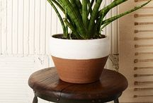 That Modern Plant / Ways to have plants in modern ways around the house and office