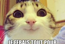 euh chat