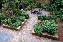 Mijn tuin