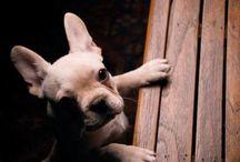Pet Care / by Mary Ann Bernhardt