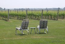 Wineries / by Susan Marchand-Steeley