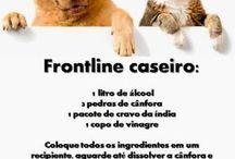 Animals | Animais / How to train cats and dogs | Como treinar gatos e cães