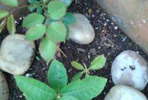 mis bonsais y otros