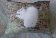 White squirrels