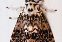 moths & more
