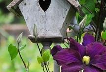 Ptáčci v zahradě