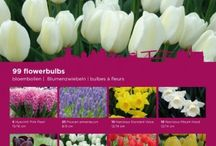 Spring Flowering Collections Bulbs / Welcome to Queen Flowerbulbs - the right place for the best quality flower bulbs. Our experts have put together a number of magnificent collections from our special and extensive range of bulbs. Enjoy browsing through our site and find out why we are so proud of our Queen!