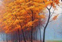 Autumn.....