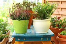 Great Garden E-Newsletters / Garden inspirations from the members of National Garden Bureau.