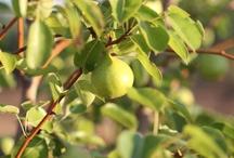 Eumelia Organic Farm