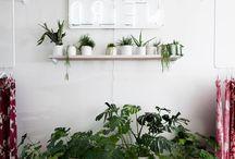 decor: home plants | Zimmerpflanzen