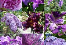 Couleur : Violet et mauve / Décoration,  jardin,  objets : violet