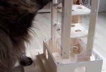 Katzen spielplatz