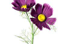 Blumen und Blüten / Kunstblumen von decorado