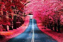 Amazing photo's