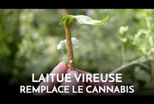 Id // Plante médicinale @Cami