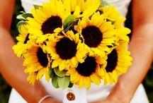 SunFlower - Napraforgó