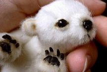 Baby Animals and Other Cute Stuff / by Cindy Marshall