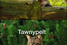 cats andere wolven