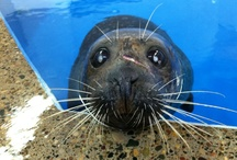 Seals / Como Zoo's Seals