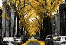 Yellow / by Tonya Jordan-Pharr