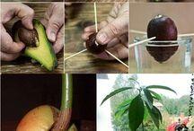 Jak co pěstovat