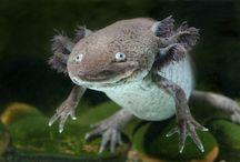 Criaturas misteriosas e ameaçadas de beleza / Strange Beautiful Criaturas