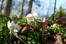 Frühling an der Ostsee und in Mecklenburg / Vorpommern / Spring on the Baltic Sea and in Mecklenburg / Vorpommern