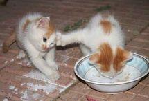 muut kissat