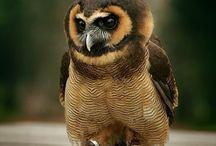 owls an birds