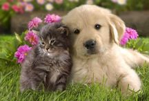 Lovely Animals / Animals... Dogs, Cats, Dolphins etc