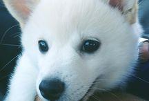 A. Next pet