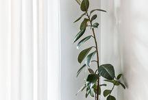 Shelves + plants