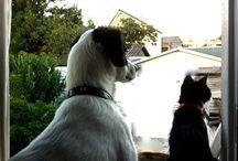 Perro y gato / Los raros hermanos juntos. Los amo!
