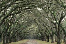 Charleston & South Carolina / by Tanya Sizemore