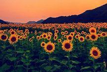 Creation / Enjoy the little things ΧΧ nature, land, flowers