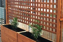 Privacy Vine for backyard