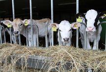 Maatilayrityksen hyvinvointi / hyvinvointi