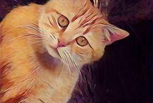 Animals Prisma Photos