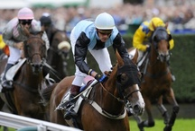 Mooie foto's paardenrennen