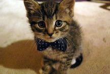 cuteness / by Holly Kaiser
