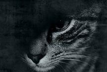   Felin / Photos of cat