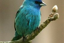 I love birds