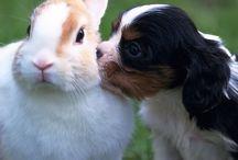 love dieren
