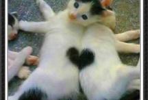 Hearts hearts everywhere / by Kimberly Hamner