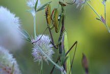 böcek