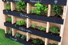 Gyógynövény és fűszer kert