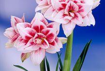 Diversas flores