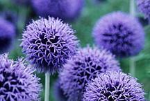 végétaux : fleurs