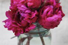 La Fleur / by Stephanie Quaife